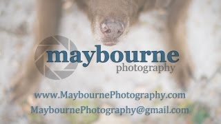 Dog Photography Columbia, Sc | 704.659.3859 | Pet Portraits In Columbia