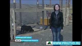 Репортаж о приюте бездомных животных