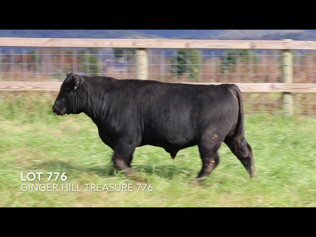 Ginger Hill Angus Lot 776