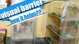 How visual barrier helps in bird breeding/ how to use visual barrier for bird breeding