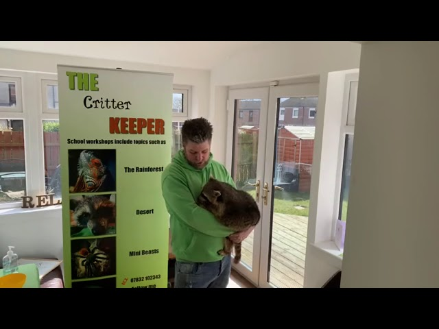 Live video 10 (Rocket the Raccoon) Help support The Critter Keeper during COVID 19 Lockdown