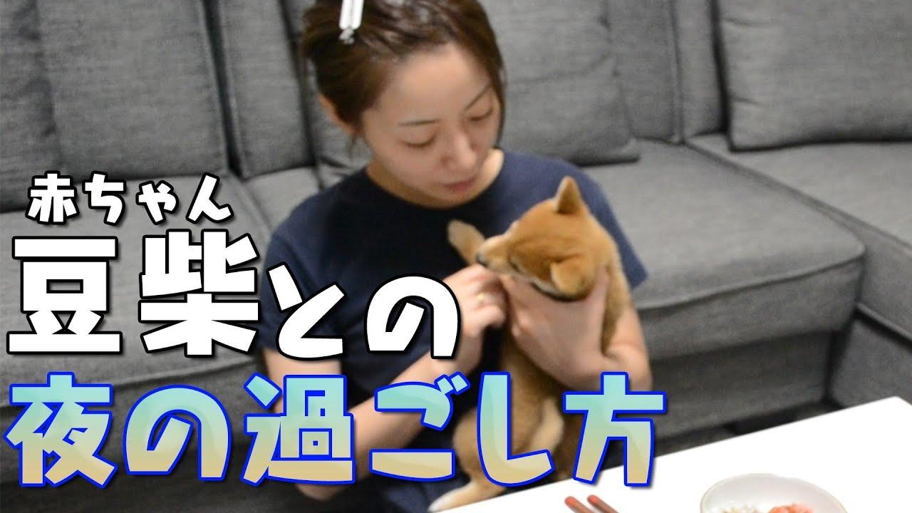 椎名歩美と愛犬の夜の過ごし方【豆柴】【子犬】【夜ご飯】【至福】【リアルなお家時間】