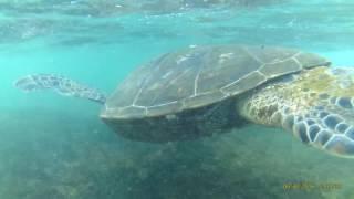 Turtle Beach, Oahu, Hawaii - Northwest Shore