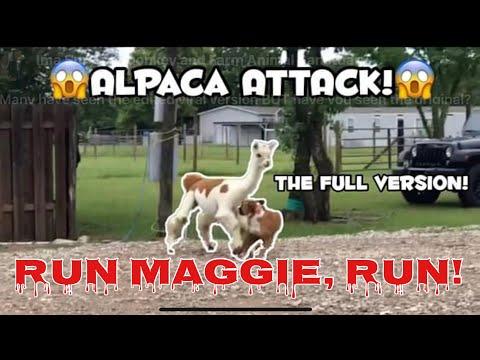 Run Maggie, Run!