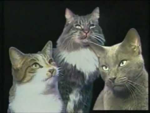 gatti natalizi gatos navide os christmas cats youtube On gatti natalizi