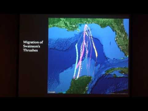How understanding the behavior of migratory bird