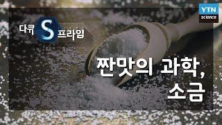 짠맛의 과학, 소금 [다큐S프라임] / YTN 사이언스