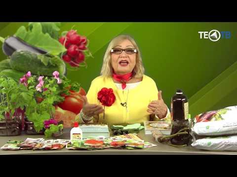 'Сад и огород' с Октябриной Ганичкиной. ТЕО-ТВ