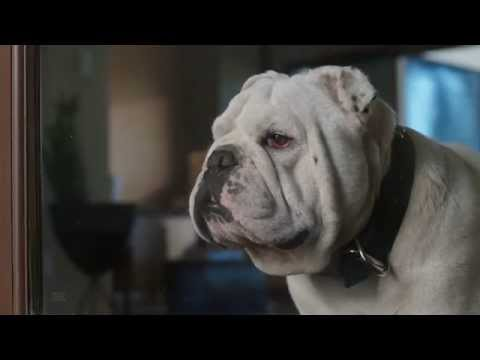 2015 Coldwell Banker TV Commercial: Home's Best Friend