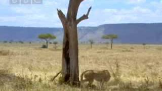 African elephant teaches curious cheetah cubs a lesson - BBC wildlife