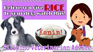 RICE FOR DOGS?