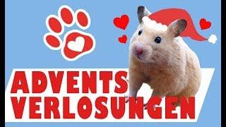 Gewinnspiele & Wichtelpakete ♥ Adventszeit bei Miyuki Tiervideos mit Herz