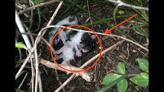 They Heard Strange Noises Coming From The Bushes Then They Looked Closer And Saw This…