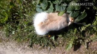 Собака встречает хозяйку после долгой разлуки