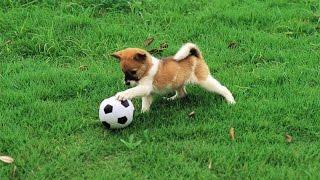 Счастливая собака прервала футбольный матч в Венесуэле 2016
