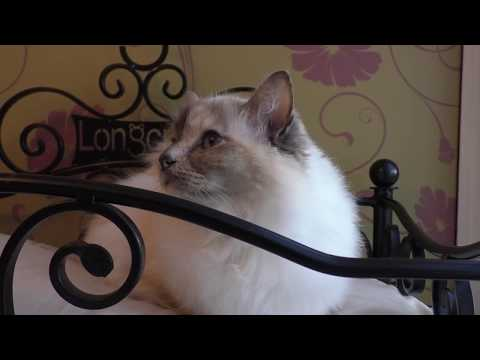 A New Cat Hotel Opens In East Hampshire