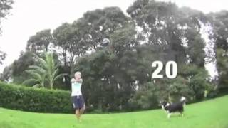 Dog Plays Volleyball With Owner