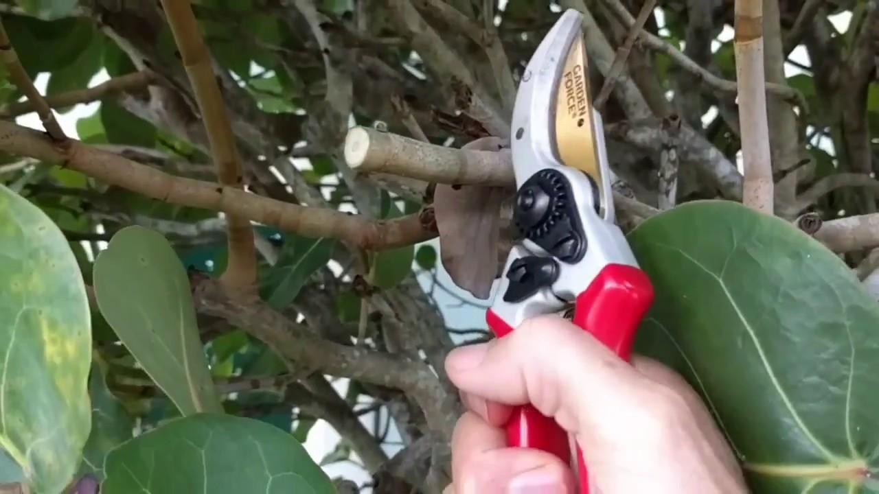 Best Garden Shears for Pruning