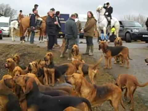 Coakham Bloodhounds 14 Feb 2009.wmv