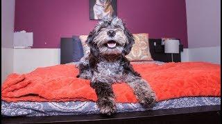 Inside New York's Luxury Hotel - For Dogs