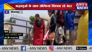 श्रद्धालुओं के साथ सेल्फियां खिंचवा रहे बंदर ANV NEWS  B LASPUR   H MACHAL PRADESH
