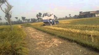 Harvesting Machine cutting rice in India