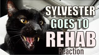 Reaction To Talking Kitty Cat Episode 67 Sylvester goes to Rehab