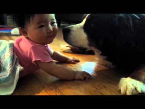 When baby meets bernese mountain dog