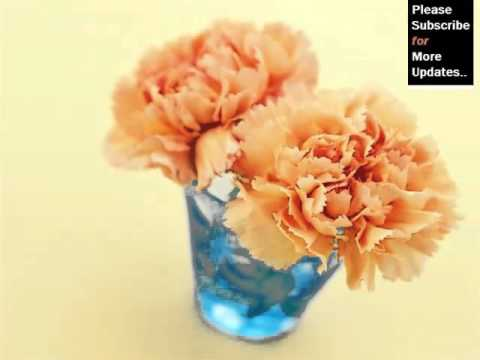 Carnation Flower Vase | Colorful Canation Beautiful Pictures