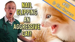 How to Clip an Aggressive Cat's Nails (without losing blood!) - Cat Health Vet Advice