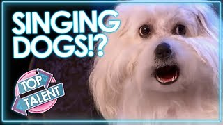 SINGING DOGS!! YOU WONT BELIEVE IT!!! Crazy Dog Auditions On Got Talent & X Factor | Top Talent