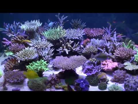 Amazing 175g SPS aquarium make your eyes relaxed