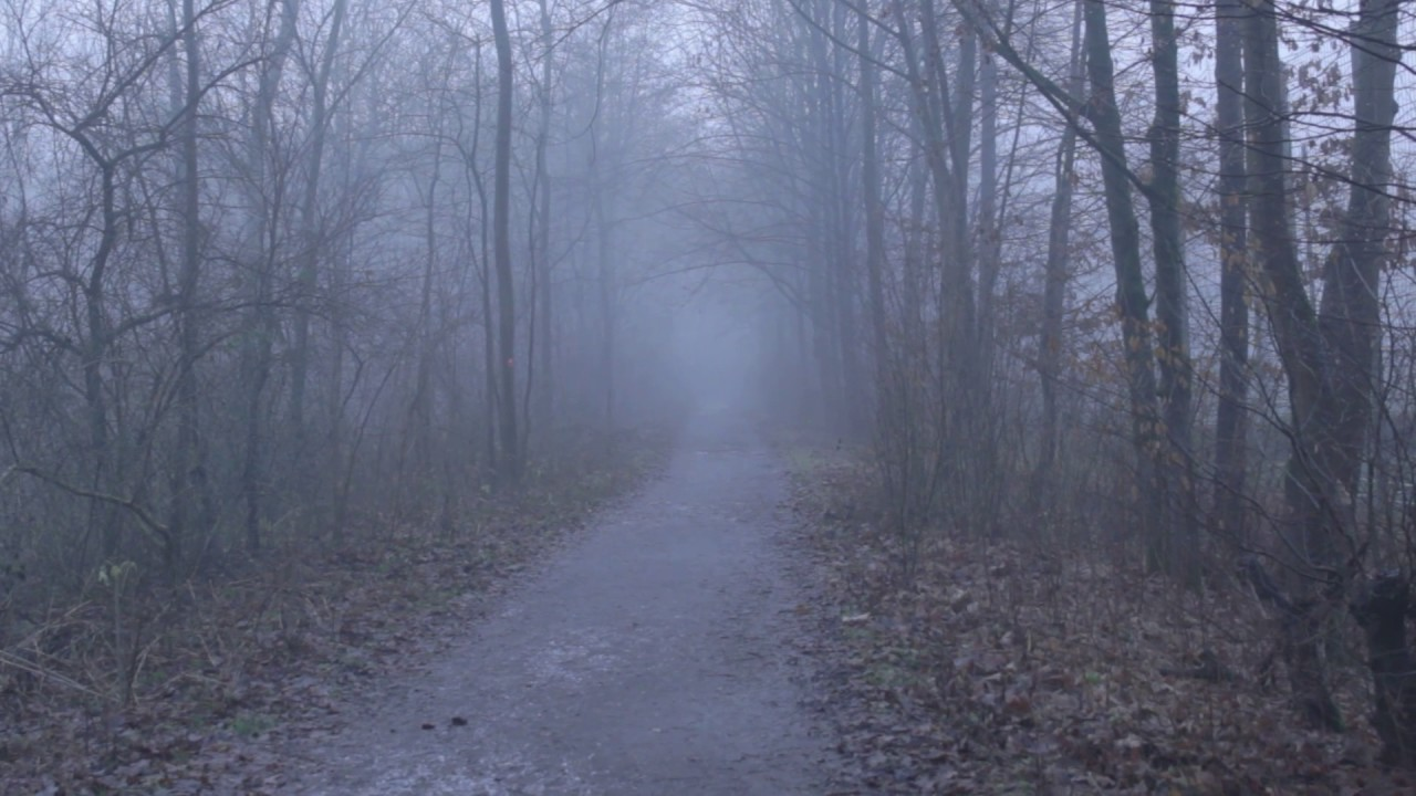 Creepy Forest Path Fog Free Horror Stock Footage