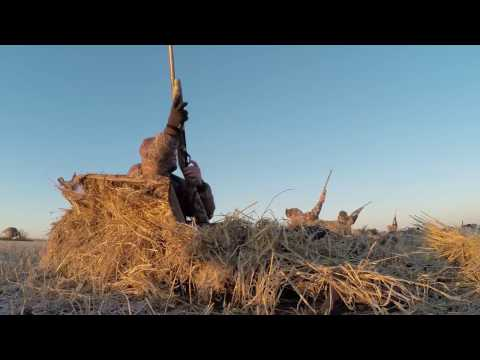 Hired to Hunt Season 2 #13 - Goose Hunting and Duck Hunting.  Limit hunts in Alberta
