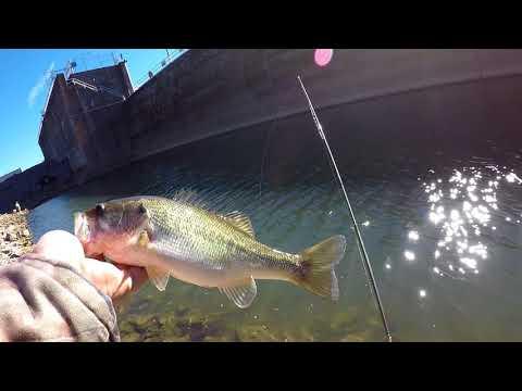 Bass Fishing At The Guntersville Dam