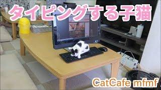 パソコンのキーボードの上で 遊んでる子猫ちゃん。 パソコンさんも嬉し...