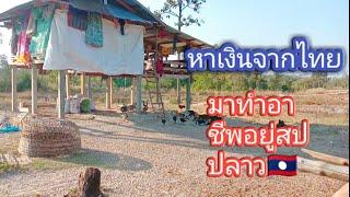 //ป้าหาเงินจากไทย🇹🇭มาสร้างรายได้อยู่สปปลาว 🇱🇦ทําเถียงนา 20,000 บาท $ได้เงินจากน้ำพักน้ำแรงจากไทย