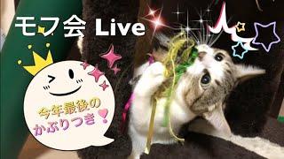ω^∩☆彡チャンネル登録はこちらから→ https://www.youtube.com/c/mofunic...