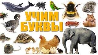 Учим буквы ( + учим животных, насекомых, птиц и т.д). Детский канал Melissa and family