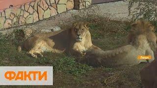 В Луцке создали зоопарк для травмированных животных и птиц