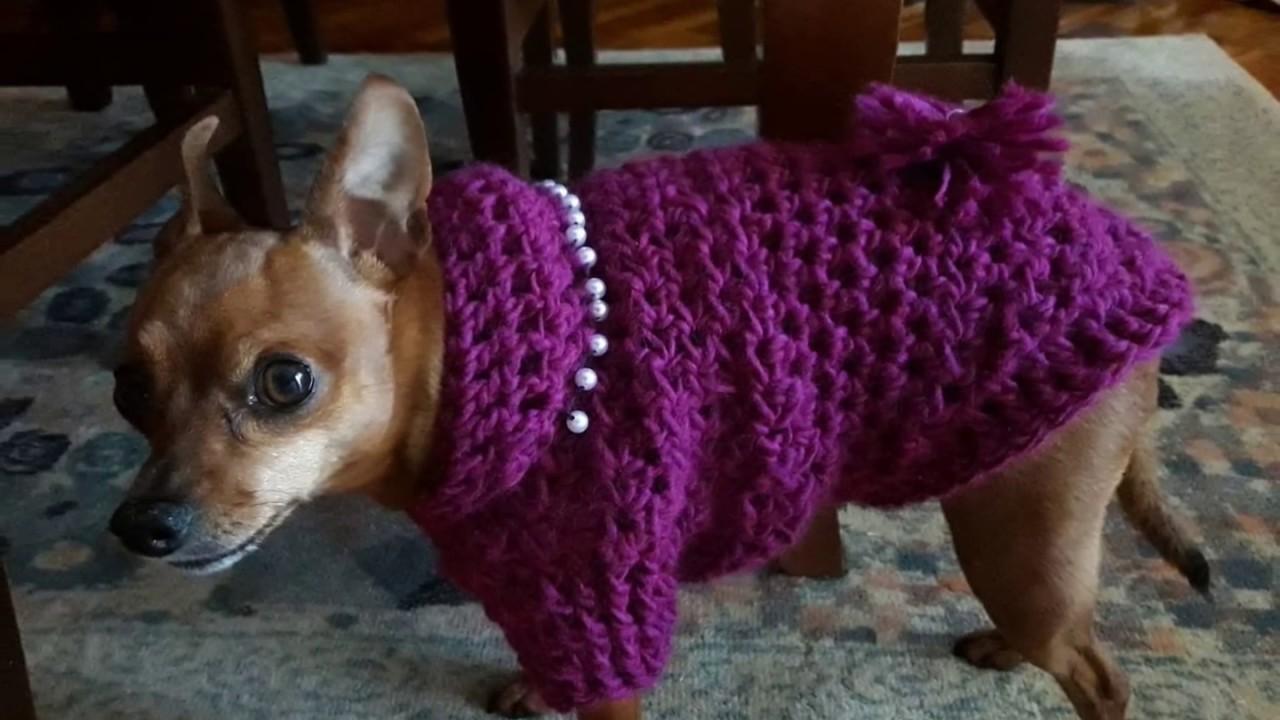Cappottini di lana per cani di piccola taglia youtube for Marsupio per cani di piccola taglia