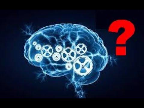 Das Gehirn (Denken): Unser ineffektivstes Organ