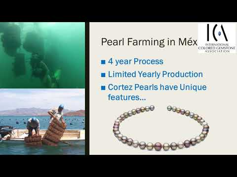 ICA Jaipur Mexican Pearls Presentation 2017 with Douglas McLaurin