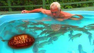 【2分10秒からついに…】人喰い魚ピラニアのプールに挑戦する男、現る!