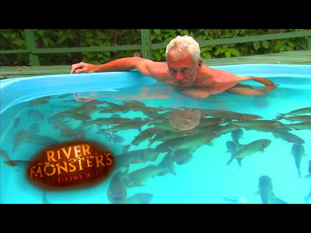 Swimming With Red Belly Piranhas – River Monsters