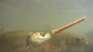 Śmieszne. Jak ryby jedzą paluszki?