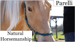 PARELLI Natural Horsemanship/ Training by NANCY SLATER