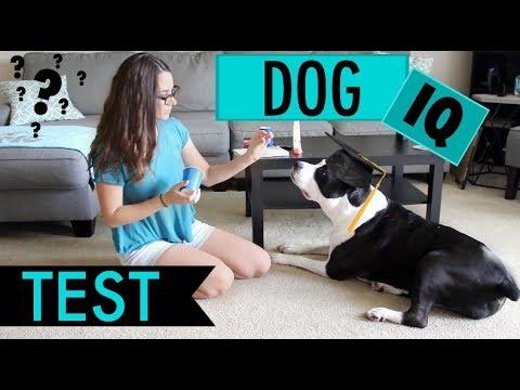 Testing My Dog's Intelligence - DOG IQ TEST!