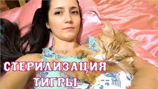 Стерилизация кошки. Как животное отходит от наркоза. Что делать после операции? The Alice Twins #45