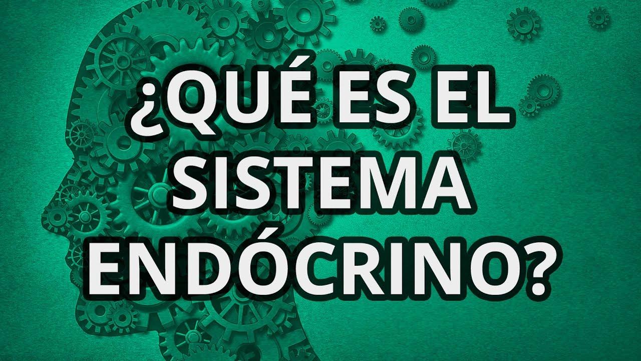 Qué es el Sistema Endócrino? - YouTube